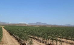 The Threat to our Ecosystem – The Ecocide of the Olive Industry