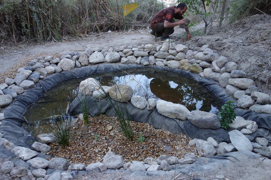 Wastewater treatment pond